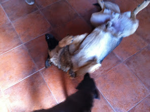 Photo: Malia's new friend in Villa General Belgrano, Argentina