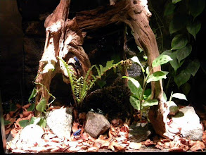 Photo: Vackert terrarium