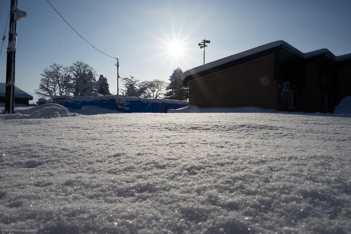 雪下に潜む神秘な力