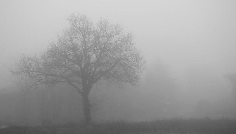 solo nella nebbia! di silvergdb