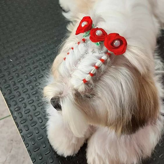 curso de penteado em cães