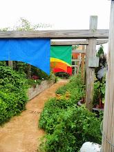 Photo: Colorful flags in Wegerzyn Gardens, Dayton, Ohio.