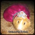 Guinée Pig Vêtements icon