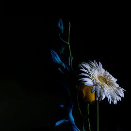 Only For You by Dibyendu Das - Novices Only Flowers & Plants