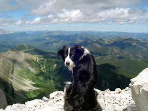 Photo: At the summit of Crowsnest Mountain Grotto, our border collie, was mesmerized by the view. I tried to photograph her trance-like concentration, but she heard me and suddenly turned around.
