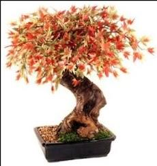 日本の盆栽のデザインのアイデアのおすすめ画像4