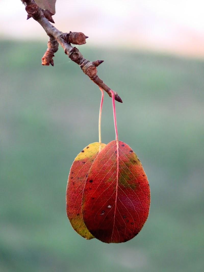 orecchini d'autunno di mariellaturlon