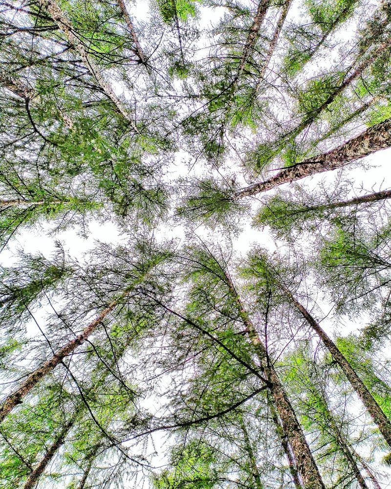 Perdersi nel bosco  di ii_am_noone