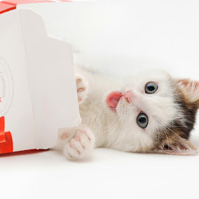 Enjoyment by Nadezda Tarasova - Animals - Cats Kittens ( baby, young, animal )