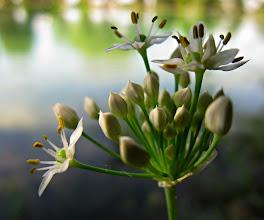 Photo: White Flower