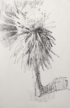 Photo: Palm Tree at Stazione di Passignano