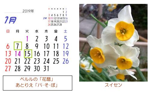 1月の花暦
