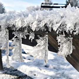 Frozen Fog  by T Sco - Nature Up Close Other Natural Objects ( snowflake, frigid, bench, nature, crystal, winter, ice, cold, icicles, wonderland, snow, weather, icicle,  )