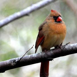 by Mark Luftig - Animals Birds