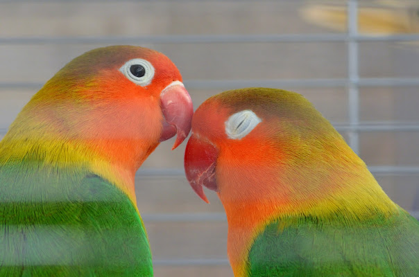 Amore in gabbia di Emanuele Reasso