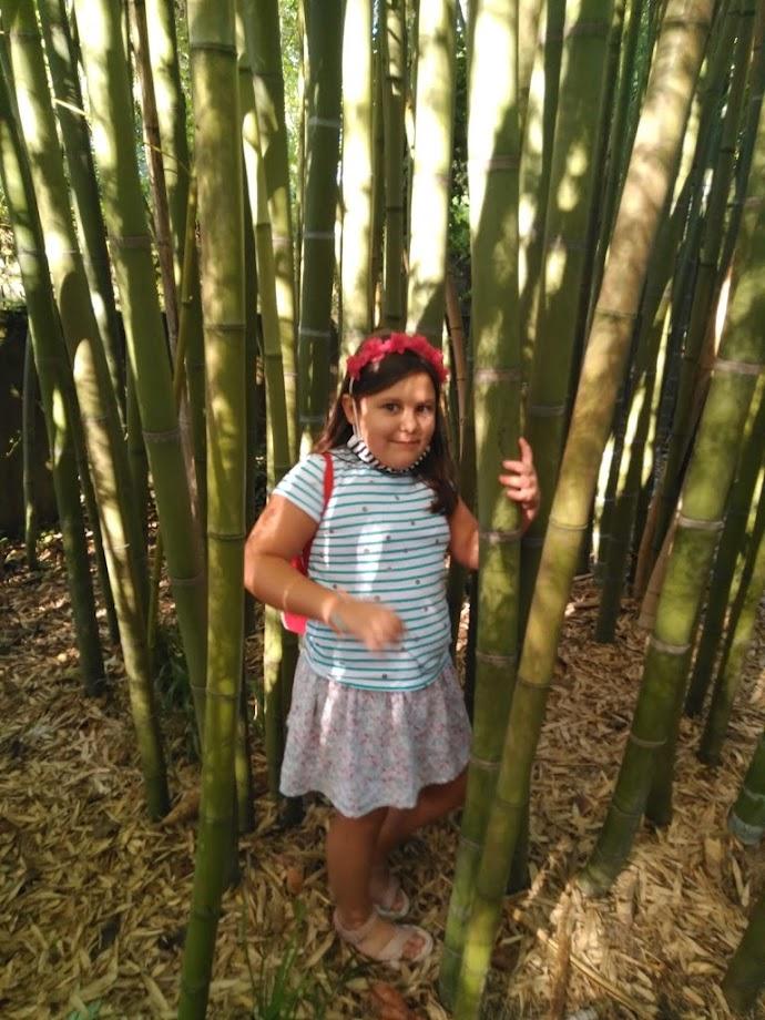 Foto Jardín botánico Fundación Sales 20