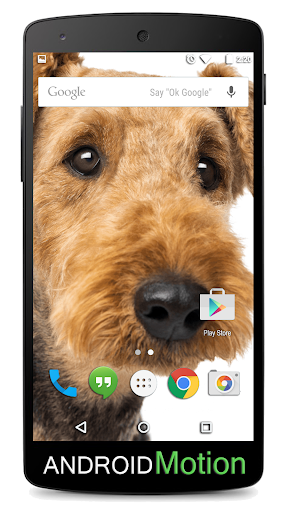 玩個人化App Airedale Terrier Background免費 APP試玩