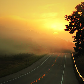 Into the Sun by Aaron Shaver - Landscapes Sunsets & Sunrises ( tree, nature, fog, mood, lead, line, road, sunrise, landscape, light, sun, mist, , path )