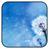 Dandelion Live wallpaper HD