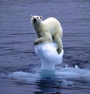 http://www.climatenewsnetwork.net/wp-content/uploads/2013/11/Melting-ice-polar-bear.jpg