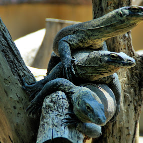The animal stack by Wahid Hasyim - Animals Reptiles ( potrait, stack, animal,  )