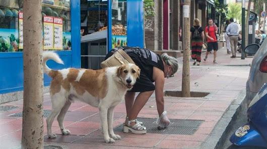 La ordenanza que obliga a limpiar orines de mascotas en la calle, el 1 de julio
