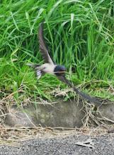 Photo: Swallow Motorway Compound, Stubbins Lane 21.05.13