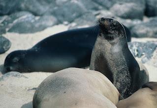 Photo: Sea Lions at Gardner Bay, Española, Galapagos Islands.