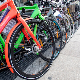 Bikes for Sale by Alan Cline - Transportation Bicycles ( new, for sale, bicycles, colorful, bike shop )