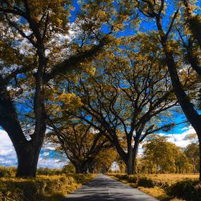 My visit to DOOARS.. by Debabrata Sarkar - Landscapes Forests