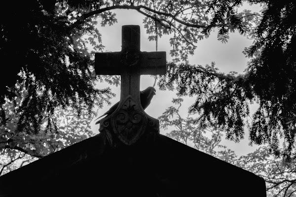 Il custode del cimitero di GazzolaFrancesco