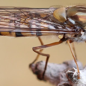 by Michelle Ng - Animals Insects & Spiders ( still learning, macro, resting, insect, nature up close )