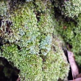 Moss by Matthew Robert - Nature Up Close Leaves & Grasses ( outdoor, moss, green, log, stump )