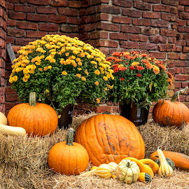Harvest Festival in Ticonderoga by Debbie Quick - Public Holidays Halloween ( hay, harvest, debbie quick, nature, adirondacks, brick wall, festival, outdoor photography, bails of hay, debs creative images, new york, pumpkins, fall, outdoors, ticonderoga, harvest festival, brick, mums,  )