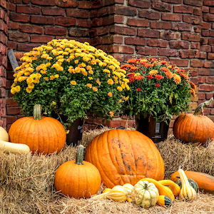 16 harvest festival (AF3A0646) October 6, 2018.jpg