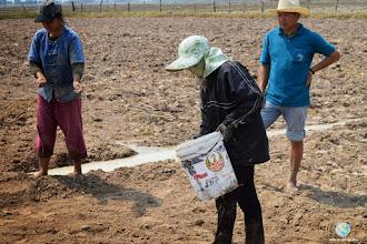 Photo: Parachuting by local farmers , TOT1 , Tha Tum , Surin