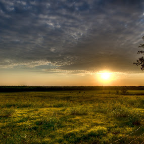 Country Sunset by Fitz C - Landscapes Prairies, Meadows & Fields ( clouds, detail, wire, grass, barbed, horizon, sun, country, field, fence, distance, sunset, bush )