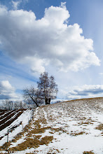 Photo: Trees on hill.