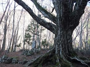 石碑と巨木
