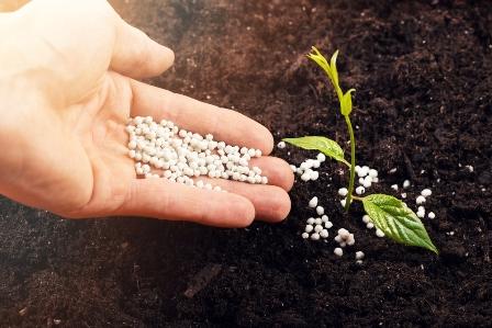Какие удобрения следует использовать в апреле