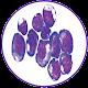 Myeloma (app)