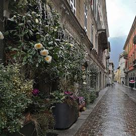 Italy by Monita Alstadsæter - City,  Street & Park  Street Scenes ( como, street, travle, italy, flower )