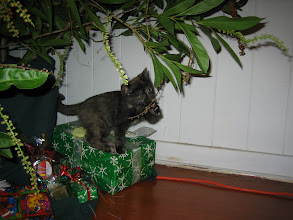 Photo: A month later Pixie celebrates her first Christmas.