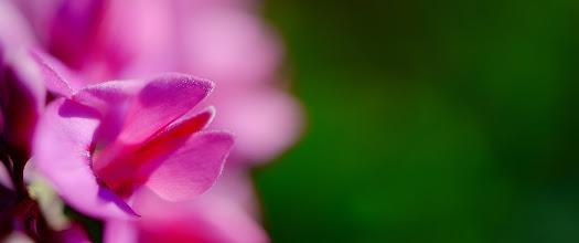 Photo: Goodnight all :) #macromonday  #macrophotography  #flowerphotography  #flowers