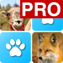 Pairs: Animals Pro icon