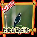 Canto de Bigodinho Offline icon