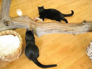 Photo: Aber auch ein liegender Baum ist fein zum spielen....