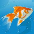 AquaLife 3D apk