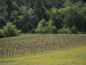 Photo: ... and vineyards.