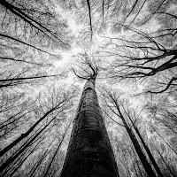 Fuga verso la luce... di Sebastiano Pieri